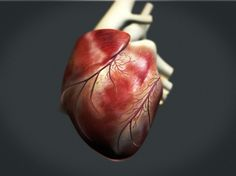 studioastic_animedical_herz_06.jpg (JPEG Image, 1100x825 pixels) #heart #visualisation #human #medical #animedical
