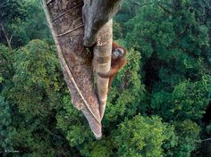 2016 Wildlife Photographer of the Year Awards