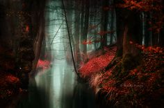Most Beautiful Forest Photography by Nelleke Pieters