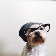 Hipster Dog #photography #hipster #dog