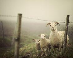 Fine Art Photography by Irene Suchocki