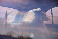 The Silence of Dogs In Cars by Martin Usborne #color