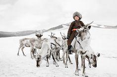 I am a dreamer : Photo #reindeer #nelson #people #jimmy #photography #tsaatan