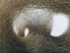 by daniel widrig #dry #nest #straw