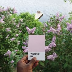 CJWHO ™ (The Pantone Project by Paul Octavious Paul...) #design #art #creative #pantone #colors #paul octavuious