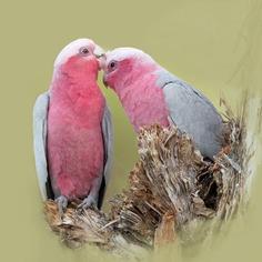 Birds of Australia: Beautiful Bird Photography by Heather Thorning
