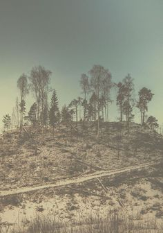 Copse #sweden #nordic #tree #pine #sollefte㥠#forest #copse