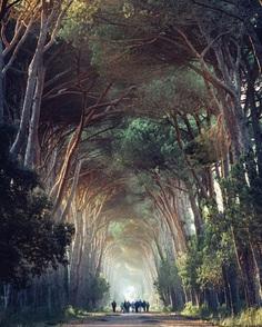 Parco Naturale Migliarino San Rossore Massaciuccoli