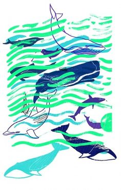 Holly Wales #whales