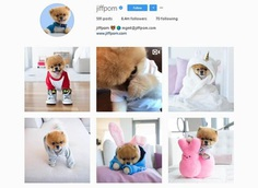 @Jiffpom- Over 8 millions followers