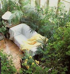 Transform your home into a Rainforest Jungle (