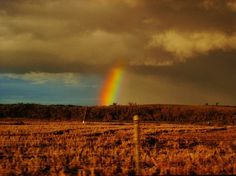 The Bird Has Rainbow Wings on the Behance Network #dusk #photography #nature #soft #divider #rainbow #country
