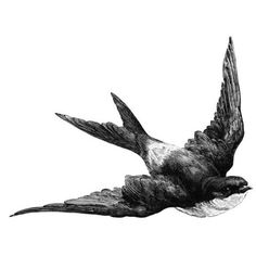 FFFFOUND! #bird #drawing