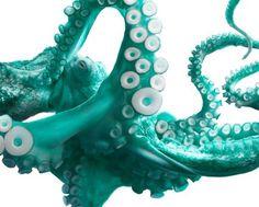 FELT #flach #branding #photo #tim #turquoise #octopus #fla #photography #octink