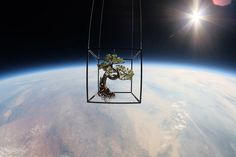 A Japanese Artist Launches Plants Into Space #clouds #space #bonsai