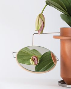 dossfiorito the phytophiler designboom #mirrors #smoke #and