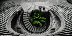 CJWHO ™ (Go Green! by Raveesh Ahuja) #white #ahuja #design #interiors #black #raveesh #and #stairs #green