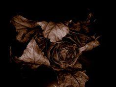 dark flower #flower
