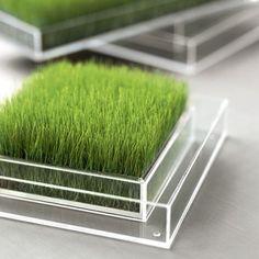 #FLORA #GRASS