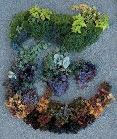 Flowers Type #type #flowers