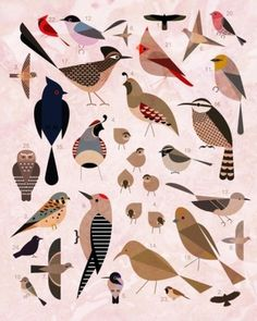 Sara Lindholm - designersof: Birds of the Sonoran Desert. #sonoran #birds #desert