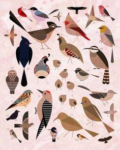 Sara Lindholm - designersof: Birds of the Sonoran Desert. #birds #sonoran desert