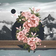 Bloom in Gloom.