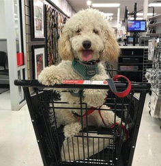 Most Dog Friendly Stores in America - Michaels