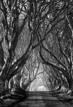 this isn't happiness™ (You can't there from here), Peteski #forest #photography #trees #road