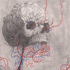 Nick Sheehy 01 #veins #skull #pencil #drawing