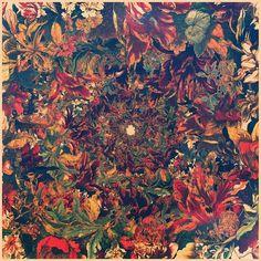 Leif Podhajsky #music #impala #tame