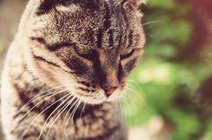 meow | art knock life