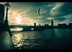 From London With Love by Sidewinder- on Artician #birds #london #love