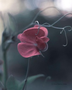 Amazing softly flower pic by Gosia