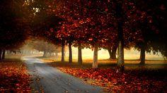 Autumn Park Landscape Wallpaper #inspiration #photography #landscape