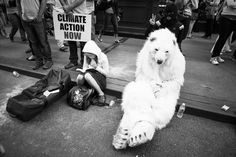 polar bear, climate, bear, protest