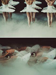 Miss Moss #swan #fog #ballet #photography #lake #beautiful