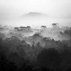 All sizes | Java Highland | Flickr - Photo Sharing! #white #rainforest #black #mist #photography #and #trees