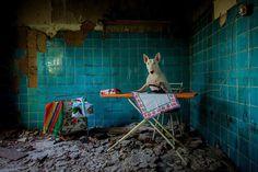 Urber Dog by Alice van Kempen