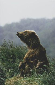 Mother Bear and Baby Bears EEK