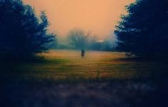 Alison Scarpulla's Strange Sorcery « Beautiful/Decay Artist & Design #mist #photography #landscape