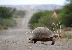 THE WORK OF KYLE MARKS #photography #tortoise #hare #illustration