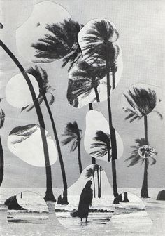 collage, palm, palm tree, water, landscape