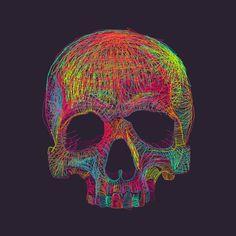 Skull Illustration by Giuseppe Gallo, Mirabilia