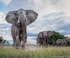Wildlife Animals by Will Burrard-Lucas #wildlife #photography #animals