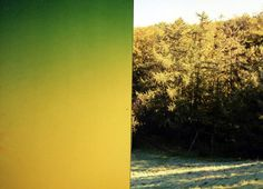Laura Knoopshttp://knoops.fr VS http://spoonk.fr #photography #green #yellow #color #nature #colours
