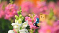 Danbo Among the Flowers