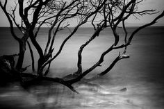 everyday_i_show: photos by Cole Thompson #water #tree #mist #photography #mangrove #lake #branches