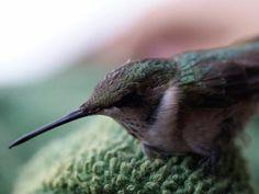 Adorable Hummingbird