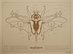 FPO: Weaponized Goliath Beetle Print #diagram #infographic #design #illustration